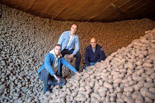 Akkerbouwbedrijf Trouw heeft 3.000 ton Innovator- en Ramos-fritesaardappelen in voorraad. Van links naar rechts: Lars Trouw (24), Johan Trouw (25) en Kees Trouw (55). - Foto: Peter Roek
