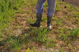 Controleren van de grond. Het neerslagtekort is in delen van Nederland al opgelopen tot 45 millimeter. - Foto: Peter Roek