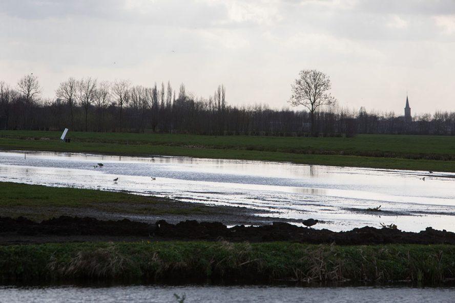 Plasdras-grasland voor weidevogels. Foto: Herbert Wiggerman