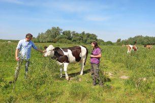 Staatsbosbeheer (SBB) biedt boeren die willen overstappen naar natuurinclusieve landbouw, pachtgronden aan. Zo kunnen zij rendabel boeren en de biodiversiteit vergroten. - Foto: Staatsbosbeheer