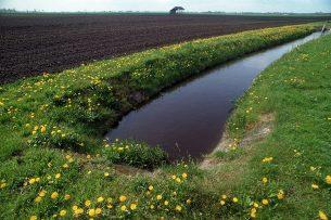 Voor beken met voldoende water geldt het beregeningsverbod niet. - Foto: Theo Tangelder