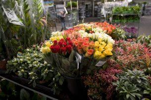 In februari werden de coronaproblemen merkbaar in de sierteeltsector. Toch steeg de exportwaarde nog met 3%. Foto: ANP