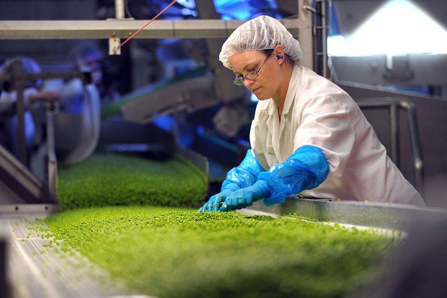 Fabriek van Bonduelle. Het bedrijf kijgt een klap van het opeens sluiten van de horeca in veel landen. Foto: ANP
