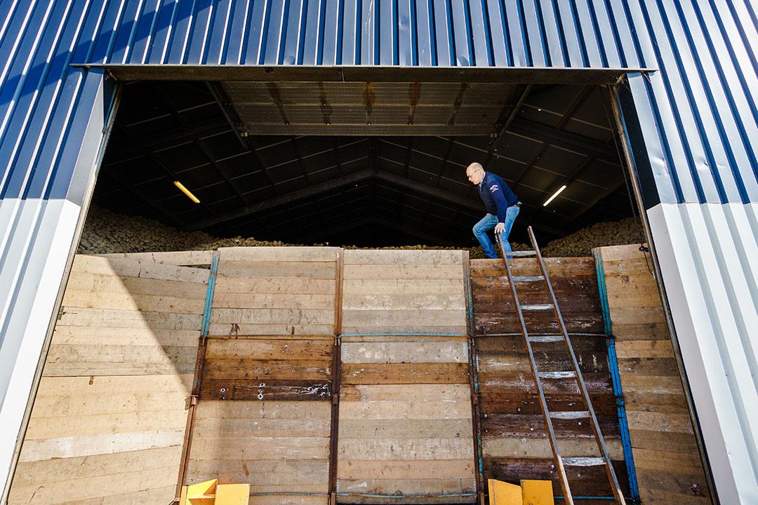 Naar schatting ligt een miljoen ton aardappelen daardoor te wachten op een alternatieve bestemming buiten de verwerkende industrie. Foto: ANP