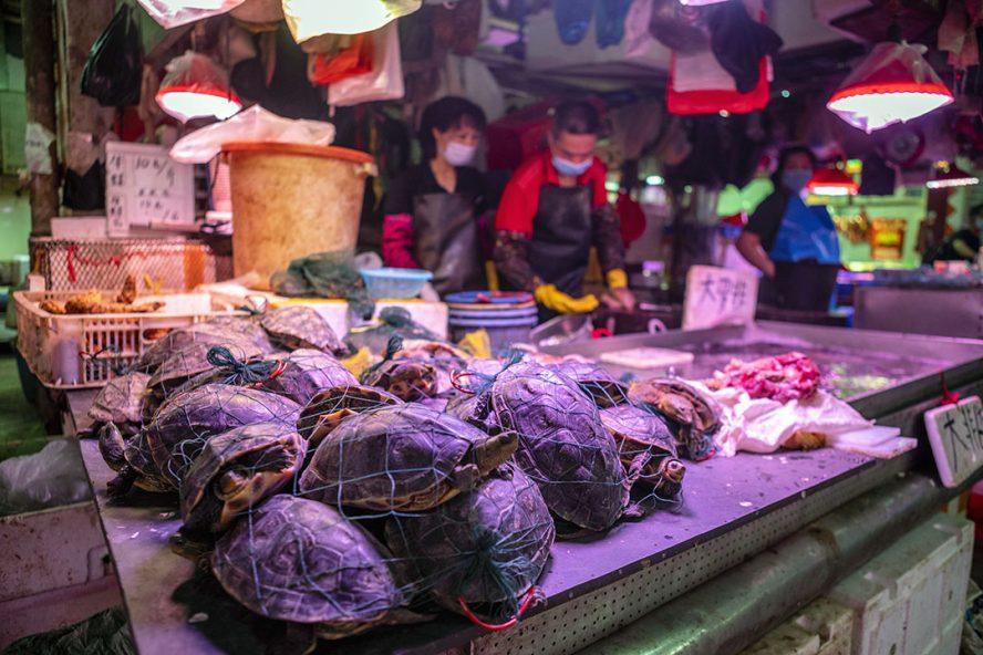 Levende schildpadden op een markt in China. Zo'n markt met levende dieren zou mogelijk de bron zijn van de uitbraak van het coronavirus. - Foto: ANP