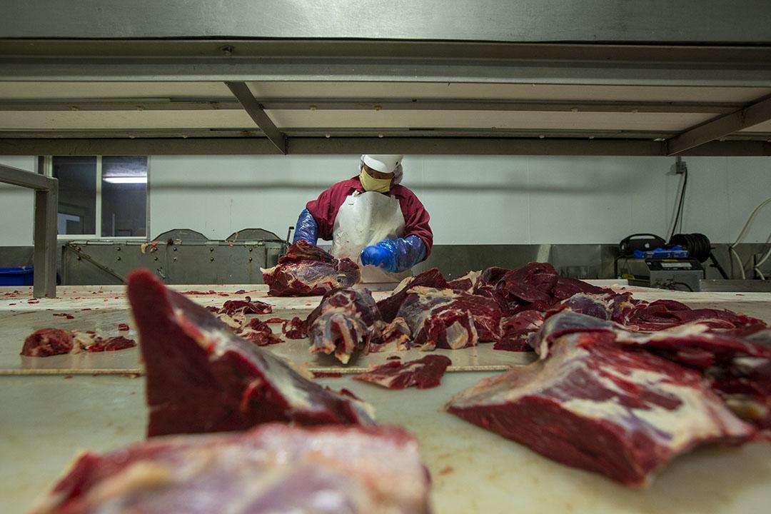 In de VS zijn de rundveeslachtingen in de afgelopen tijd gedaald tot bijna 50% onder het niveau in dezelfde tijd vorig jaar. Foto: ANP