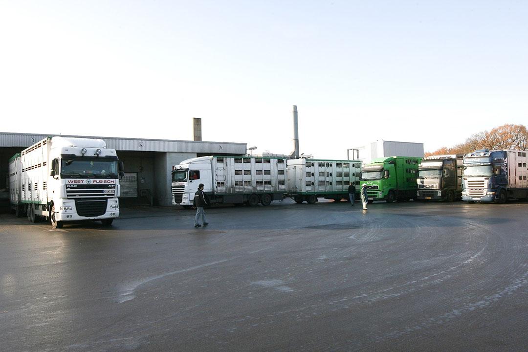 Slachterij Westfleisch in Coesfeld. Vrachtwagens op een rij om varkens af te leveren. - Foto: Ronald Hissink