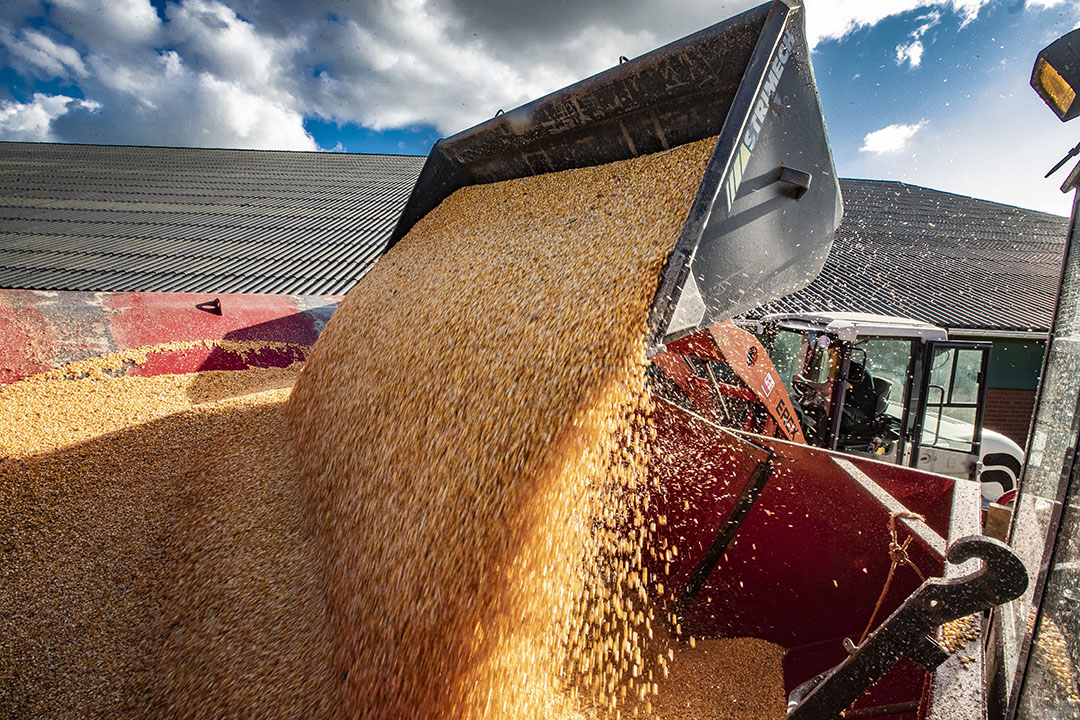 De invoerheffing beschermt de Europese maissector tegen te lage prijzen door goedkope importmais. - Foto: Ronald Hissink