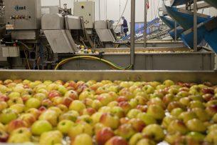 Appels worden gewassen. Foto: Jan Willem Schouten
