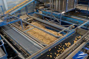 Verwerking van aardappelen bij Aviko in Steenbergen (Gld.). - Foto: Jan Willem Schouten