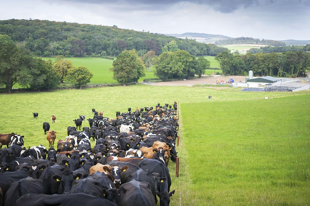 Melkveebedrijf in Ierland. Foto: Mark Pasveer
