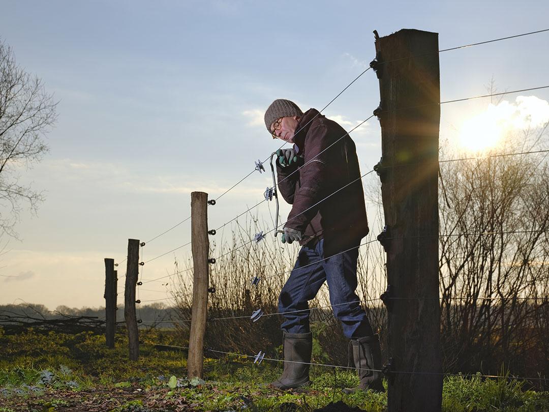 Een schapenhouder plaatst een omheining met 6 draden van 1.20 meter hoog, met stroom om zo de wolf op afstand te houden. - Foto: Ruud Ploeg