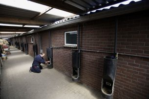 Een varkenshouder heeft tussen 2 stallen een overkapping gemaakt voor noodopvang van biggen. - Foto: Hans Prinsen