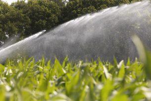 Beregen van maisland in de Achterhoek. - Foto: Hans Prinsen
