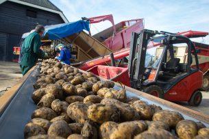 Inschuren van aardappelen. Consumptieaardappelentelers kregen de afgelopen twee jaar €1.000 per hectare voor hun inspanningen om te voldoen aan PlanetProof. - Foto: Peter Roek