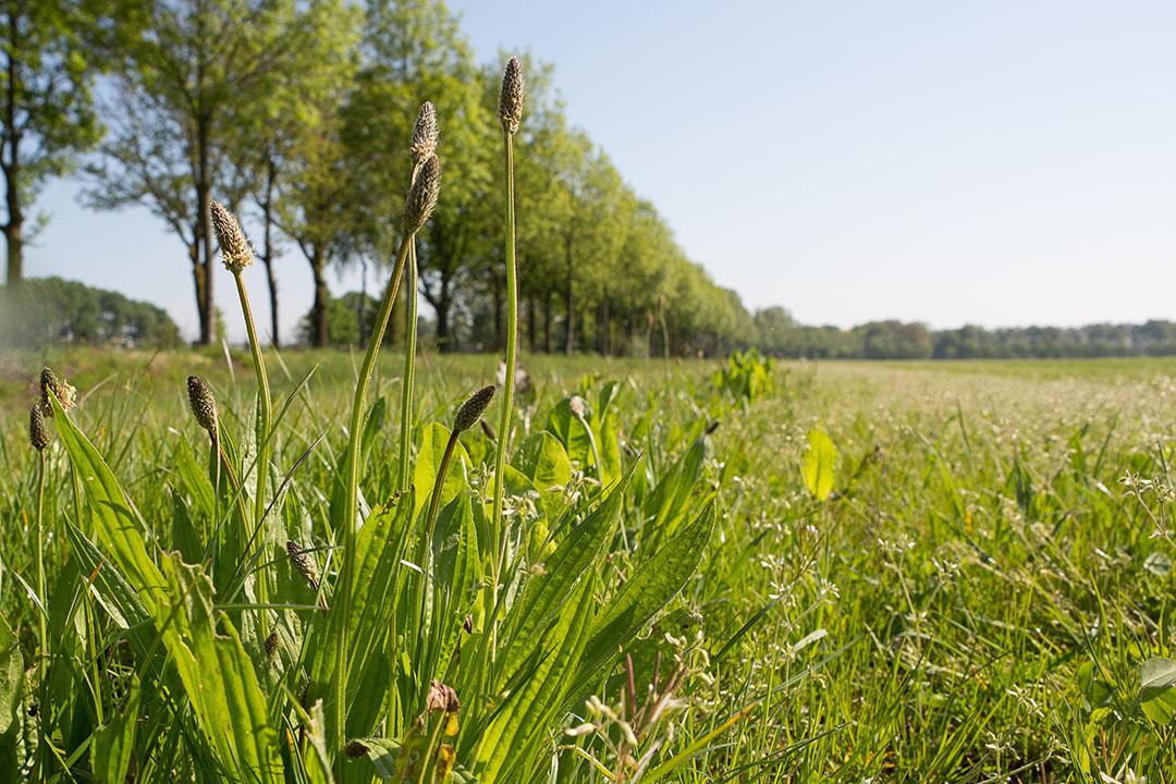 De gemiddelde agrarische grondprijs in westelijk Nederland is in het eerste kwartaal van 2020 fors gestegen. Vooral grasland werd duurder. Foto: Peter Roek