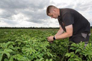 Jacob van den Borne is een van de telers die deelneemt aan het onderzoek naar aardappelen telen zonder kunstmest. - Foto: Peter Roek