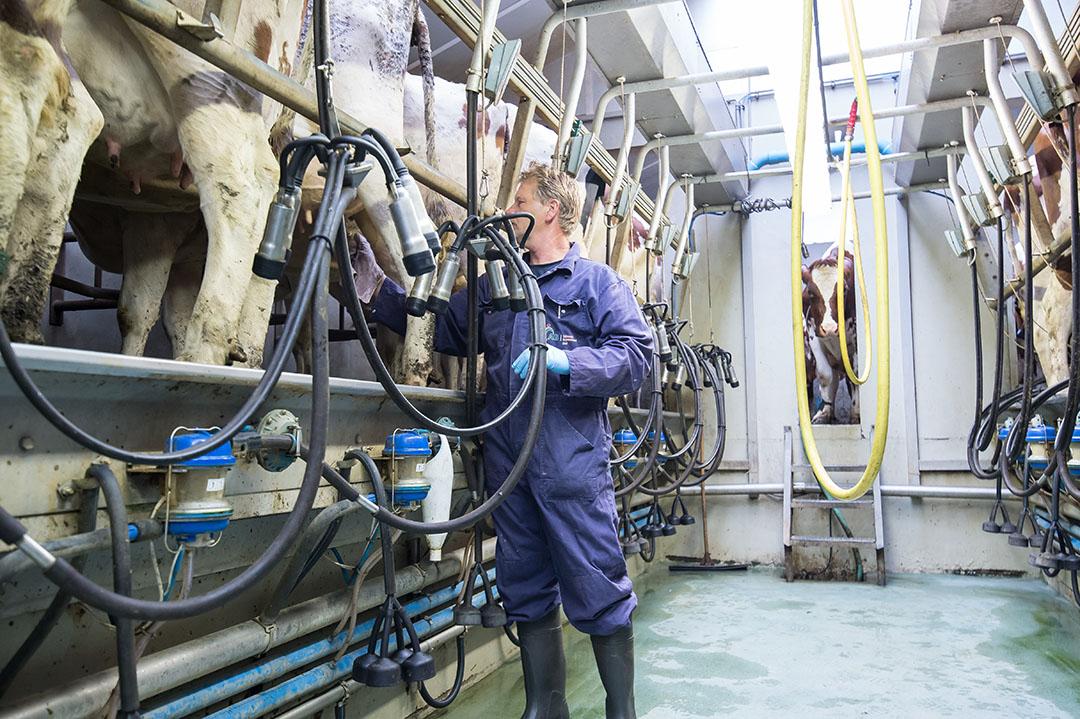 Melken in een melkput. De Europese melkprijzen zijn in april stevig gedaald. - Foto: Michel Velderman