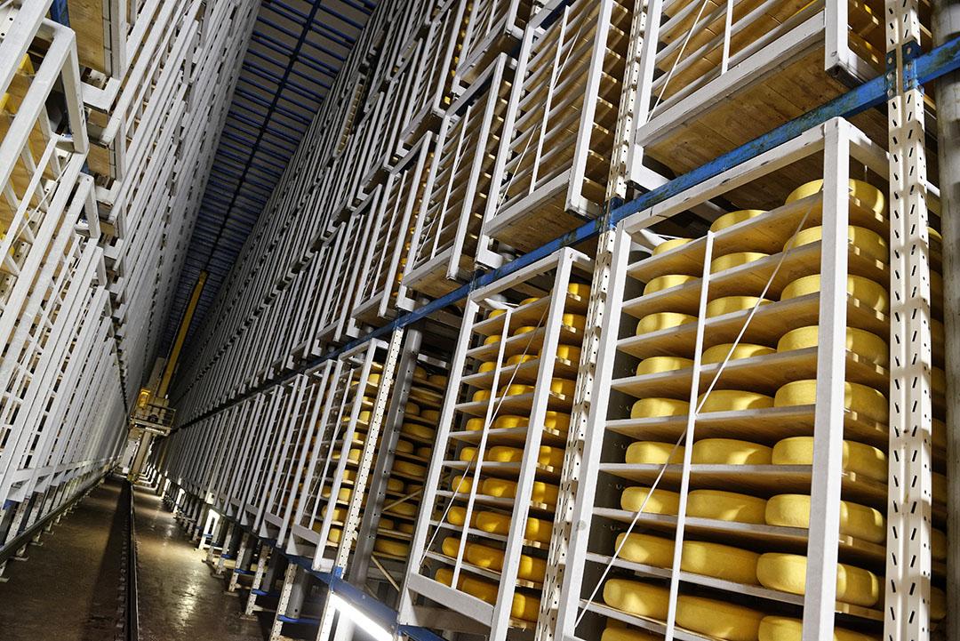 De kaasfabrikanten die kunnen, maken zoveel mogelijk kaas. - Foto: Lex Salverda