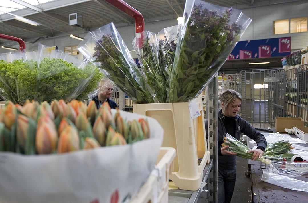 Uit gegevens van banken blijkt dat 78 bedrijven uit de sierteeltsector een beroep hebben gedaan op de borgstellingsregeling. Foto: ANP