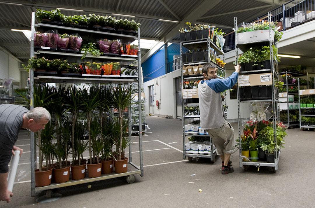 Ondanks een licht herstel door de heropening van de tuinbouwcentra noteerde de sierteelt in mei nog steeds een omzetverlies van 31%. Foto: ANP