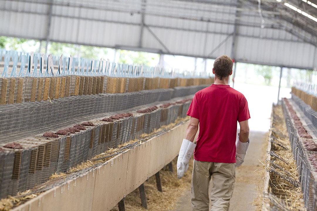 Een nertsenhouderij. De problemen voor geruimde nertsenbedrijven zijn niet opgelost met de vergoeding van een marktconforme prijs voor de geruimde nertsen, zegt LTO. - Foto: ANP
