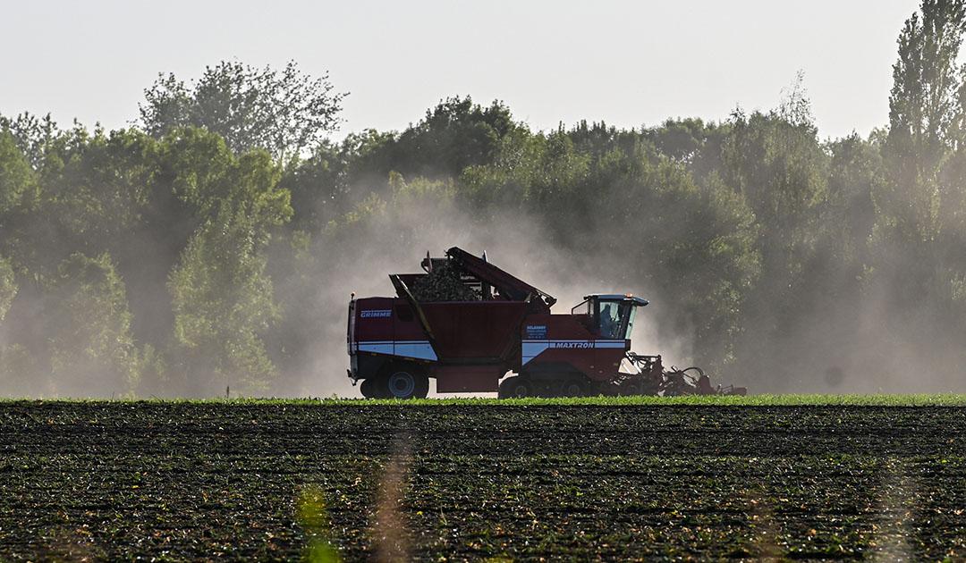 Oogst van suikerbieten in Frankrijk. Foto: ANP