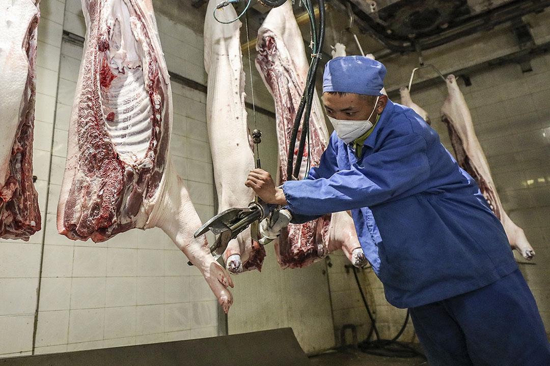 Verwerken van varkensvlees in een slachterij in Huaian, China. - Foto: AFP