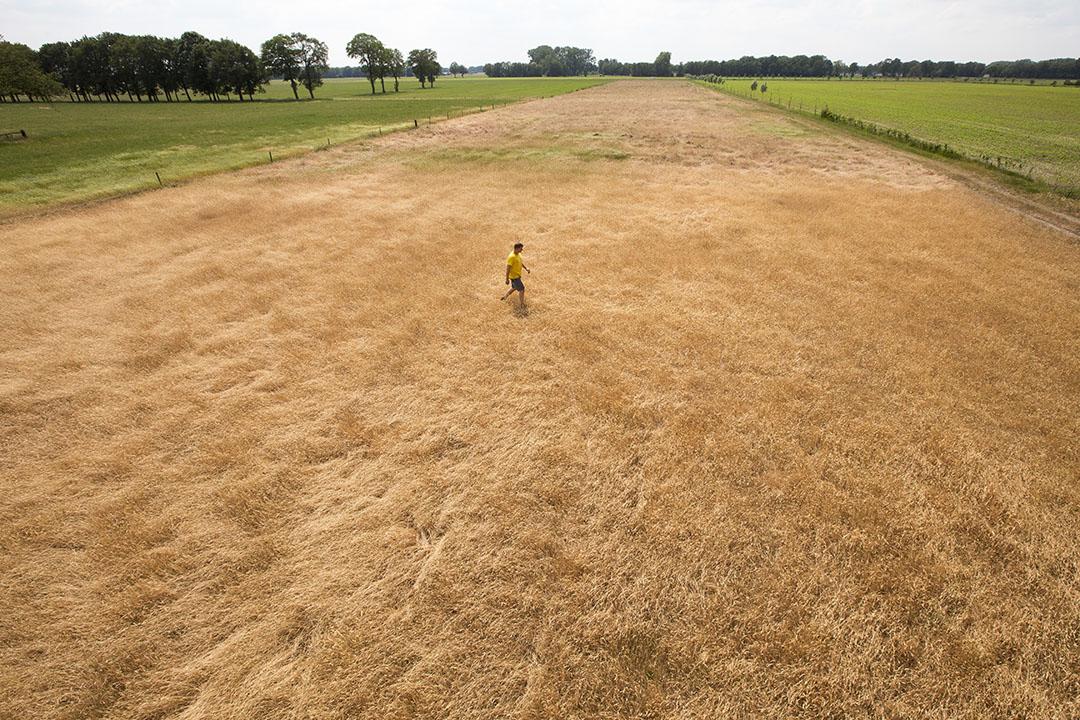Een perceel verdroogd gras in de Achterhoek. - Foto: ANP
