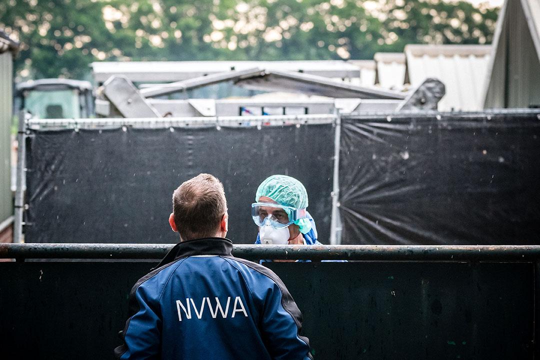 In Deurne zijn zaterdag alle nertsen van een nertsenfokkerij gedood. Foto: ANP