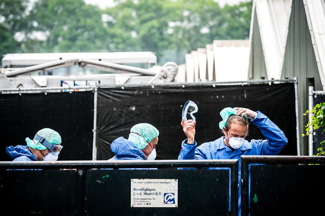 Een nertsenfokkerij in Deurne wordt geruimd. - Foto: ANP