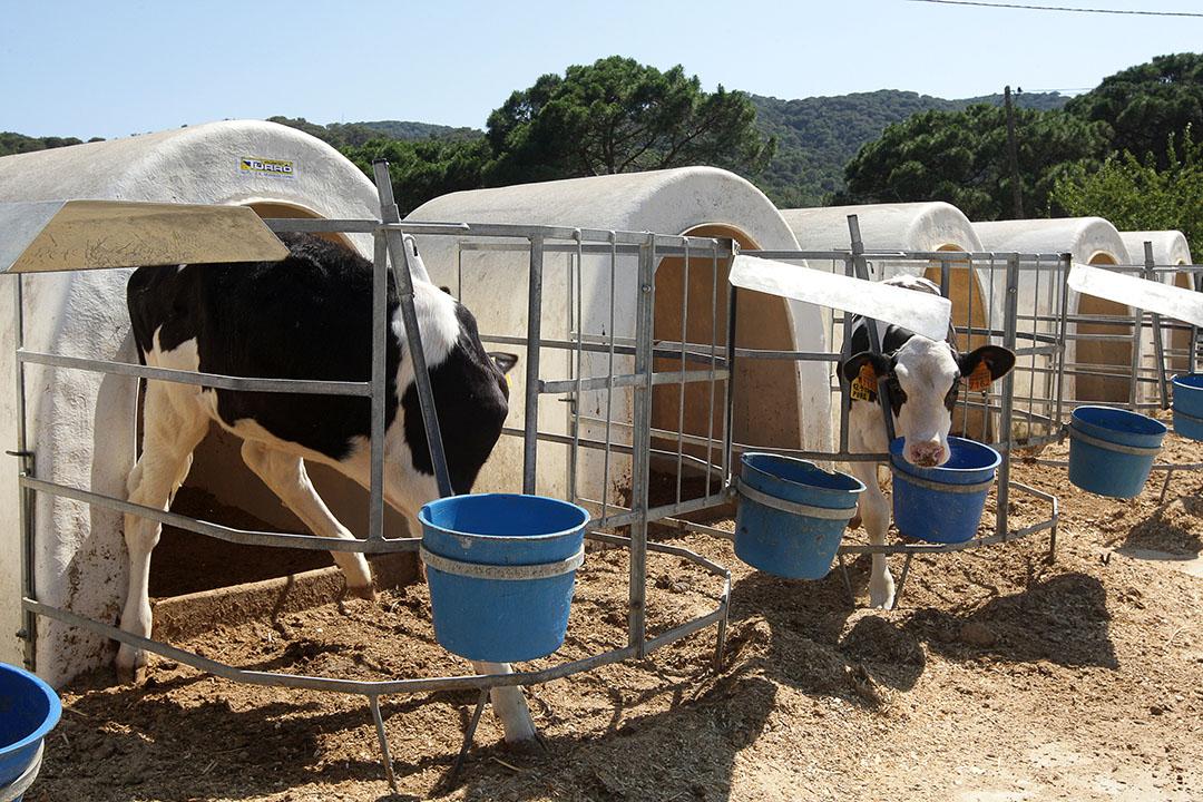 Melkveebedrijf in Spanje. Foto: Ronald Hissink