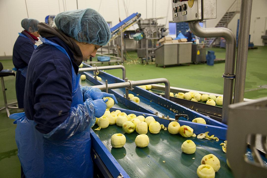 Na doorsnijden of schillen worden appels bruin. Met technieken als Crispr-Cas9 is het gen uit te schakelen dat die verkleuring van appels veroorzaakt. - Foto: Jan Willem Schouten