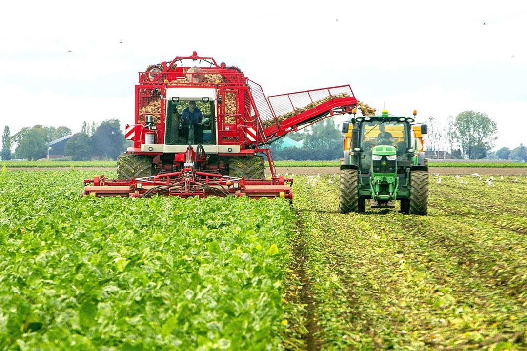 De oogst van suikerbieten in september 2019. Suikerbieten zijn geschikt als biogrondstof. - Foto: Koos van der Spek