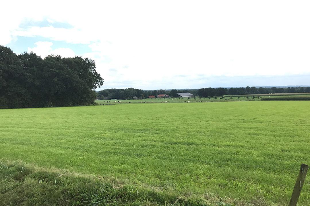 Perceel grasland. Vooral jonge boeren zien weinig kans voor bedrijfsuitbreiding of aankoop van grond. Pacht biedt uitkomsten, maar ook knelpunten en valkuilen. Foto: Martijn ter Horst