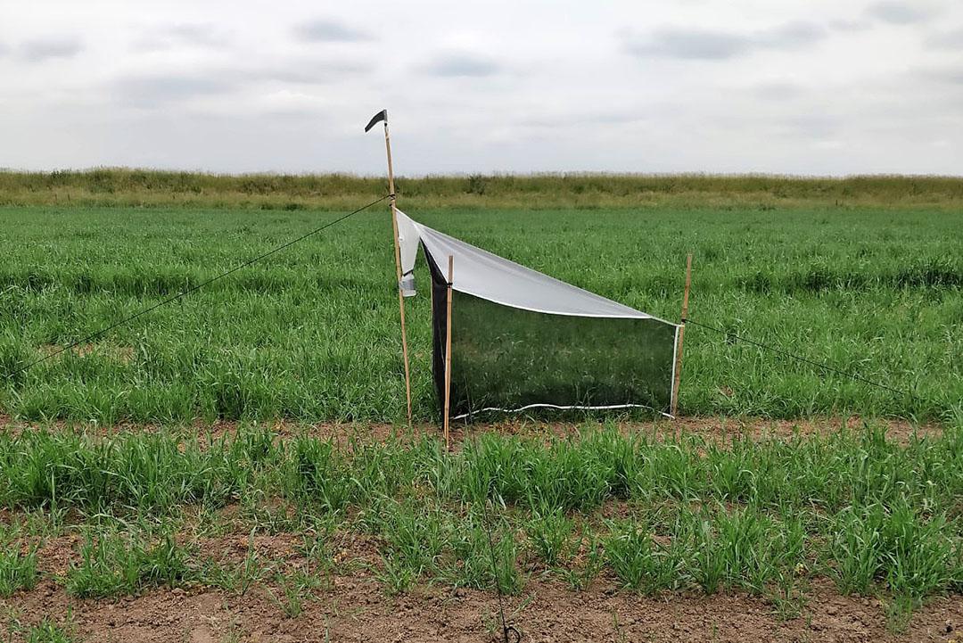 Een malaise (een soort tent) waarin gekeken wordt naar schadelijke en nuttige insecten. - Foto: Delphy