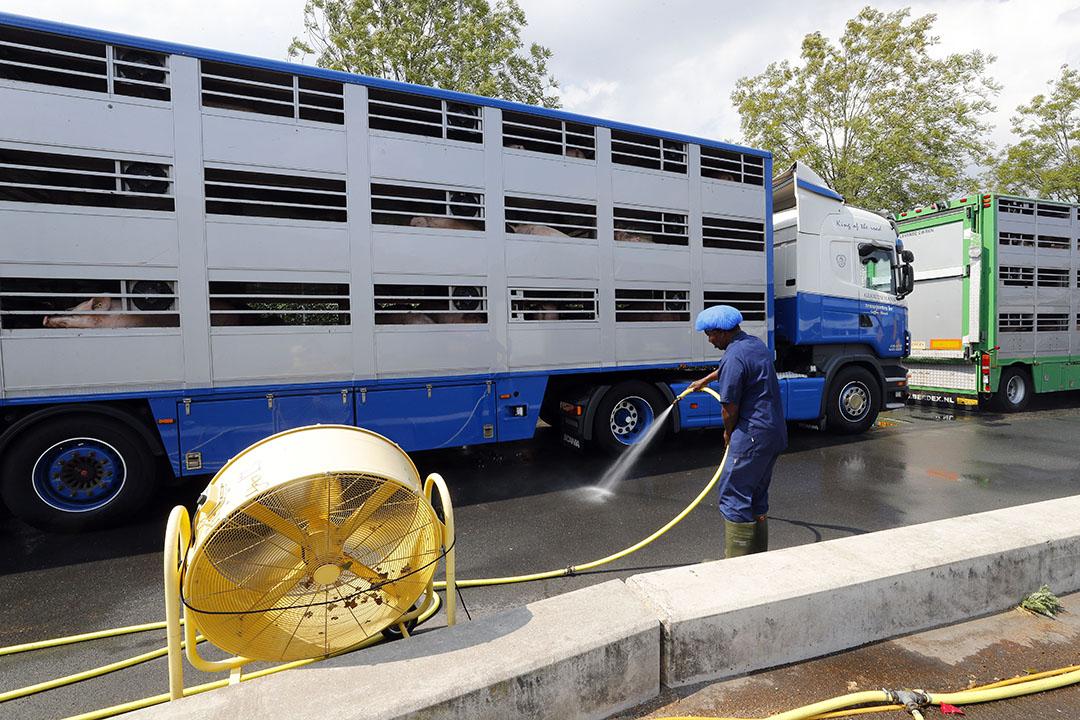Maatregelen tegen hittestress. Extra ventilatoren bij wachtende vrachtwagens bij een slachterij. - Foto: Bert Jansen