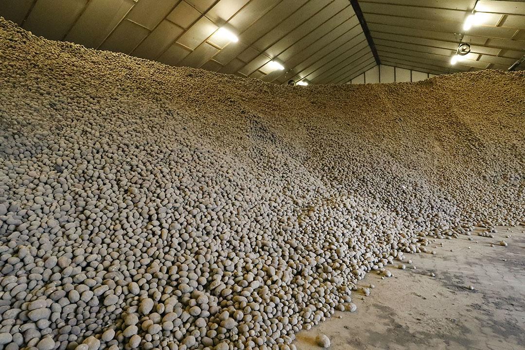 Fritesaardappelen in de bewaring. Voor 1 miljoen ton kan een vergoeding worden gegeven van 5 cent per kilo.- Foto: Bert Jansen