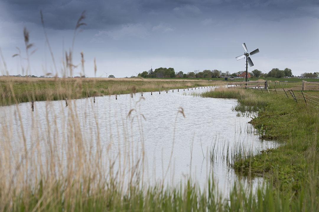 Natuurgebied in Friesland - Foto: Mark Pasveer