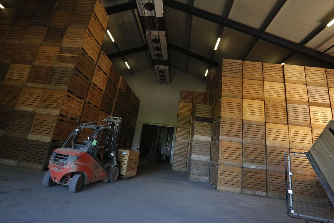 Pootgoedaardappelen inschuren in pootgoedkisten in de loods.- Foto: Henk Riswick
