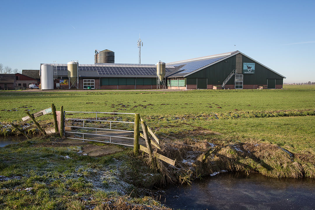 Een melkveebedrijf in Zuid-Holland. In de Hoofdlijnennotitie vitale landbouw Zuid-Holland ligt de focus op akkerbouw en melkveehouderij- Foto: Peter Roek