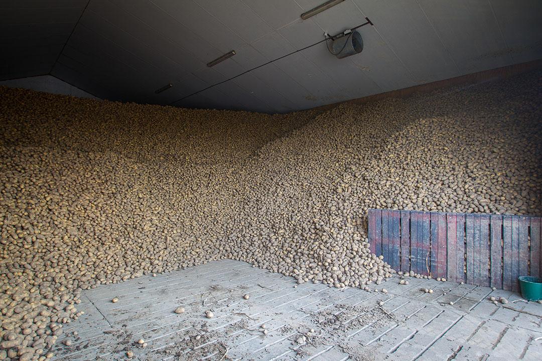 Aardappelen in opslag. - Foto: Peter Roek
