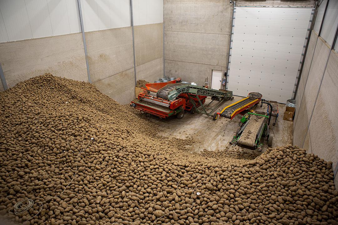 Aardappelen in opslag bij een akkerbouwbedrijf. - Foto: Peter Roek