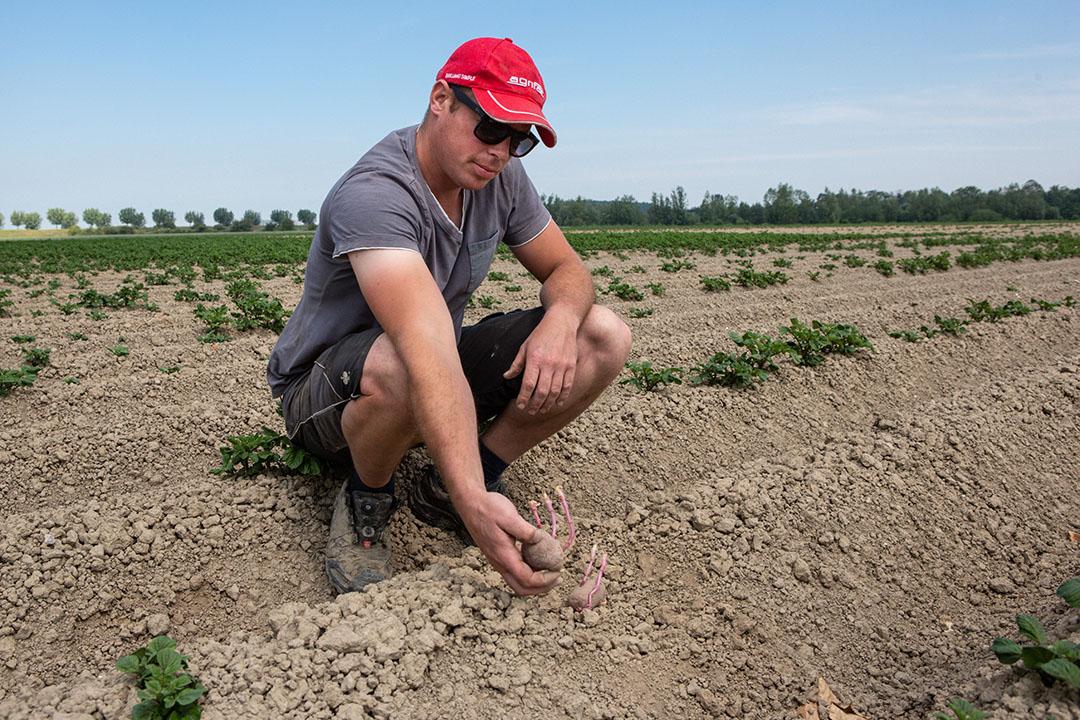 Bert de Bruijckere toont poters op zware klei; wel gekiemd maar niks geen wortel. De slechte structuur en daarna de droogte hebben dramatisch uitgepakt. Foto: Peter Roek