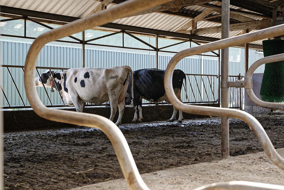 JOZ richt zich met de stikstofkraker op melkveebedrijven die inzetten op verdere groei. Foto: Lex Salverda