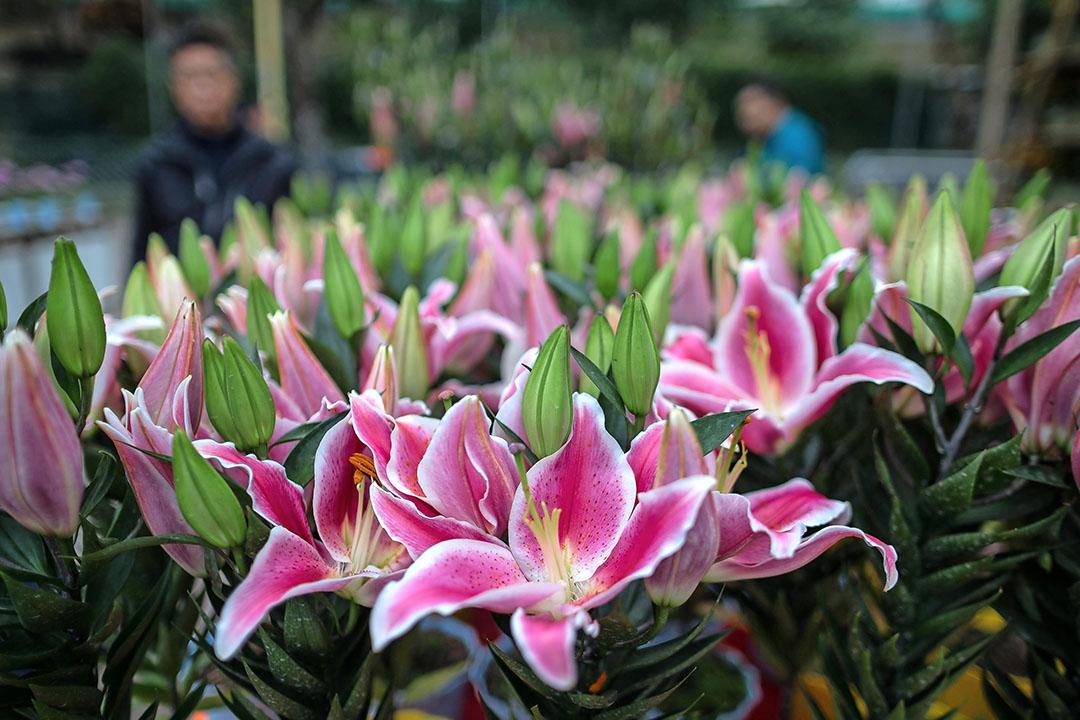 Lelies staan te koop op de markt in Hongkong. Azië is een belangrijke afzetmarkt voor leliebedrijven. Zij zijn dan ook zwaar getroffen door de uitbraak van corona. - Foto: ANP