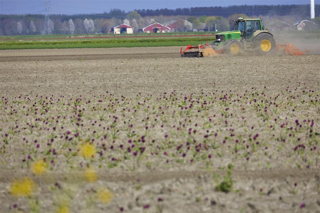 Landbouwgrond in Zeewolde. Foto: ANP