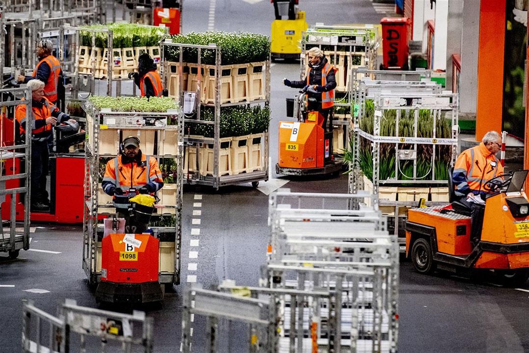 Aanvoer van verse planten in de veilinghal van FloraHolland. De planten- en bloemensector moet het vooral van de verkoop in eigen land hebben, die tijdens de coronacrisis zelfs is toegenomen. - Foto: ANP
