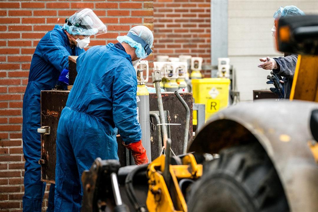 Medewerkers van de NVWA zijn bezig met het ruimen van nertsen op een met het coronavirus besmette nertsenfokkerij. - Foto: ANP