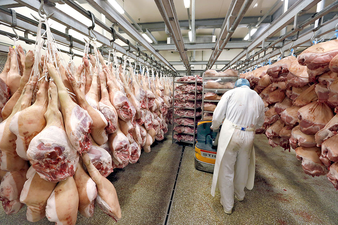 Hammen, zoals hier in de koeling van een Nederlands bedrijf, vormen de de belangrijkste grondstof voor de productie van vleeswaren, waarover jarenlang prijsafspraken werden gemaakt in Frankrijk. - Foto: Bert Jansen